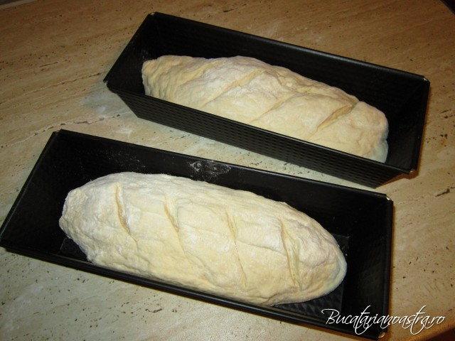 asezarea painilor necoapte in tavi reteta reteta paine de casa